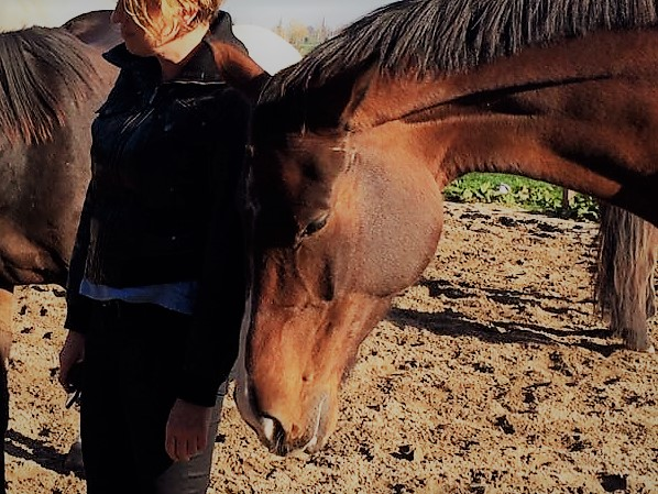 afb paardencoaching
